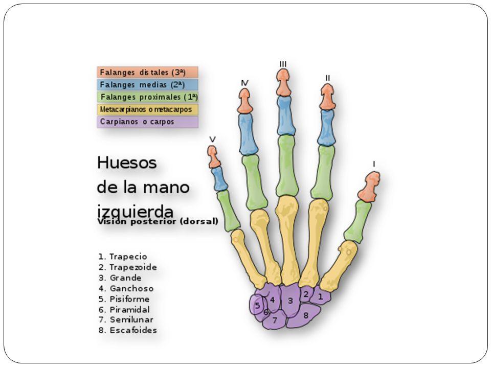 Radiografia: observar la formación de callo y desaparición de la línea de fractura.