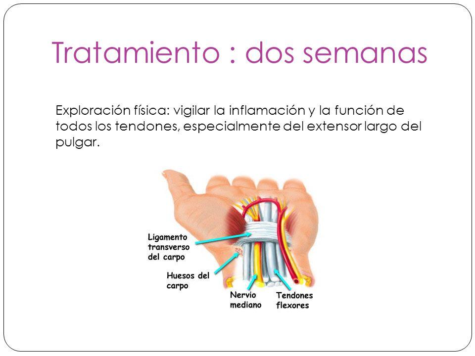 Tratamiento : dos semanas Exploración física: vigilar la inflamación y la función de todos los tendones, especialmente del extensor largo del pulgar.