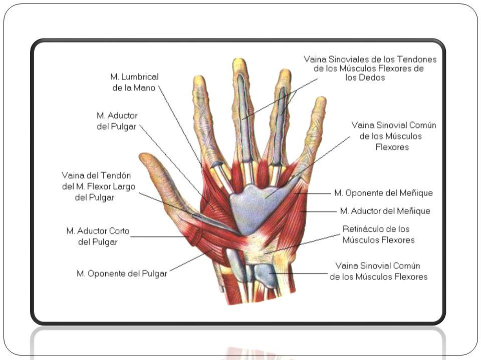 Causas: Las más causas mas frecuentes de este síndrome se deben a traumatismos recientes del carpo, fracturas del pisiforme, ganchoso y la base del 4° y 5° metacarpiano, microtraumatismos repetidos (ciclistas, motociclistas).