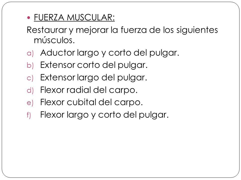 FUERZA MUSCULAR: Restaurar y mejorar la fuerza de los siguientes músculos.