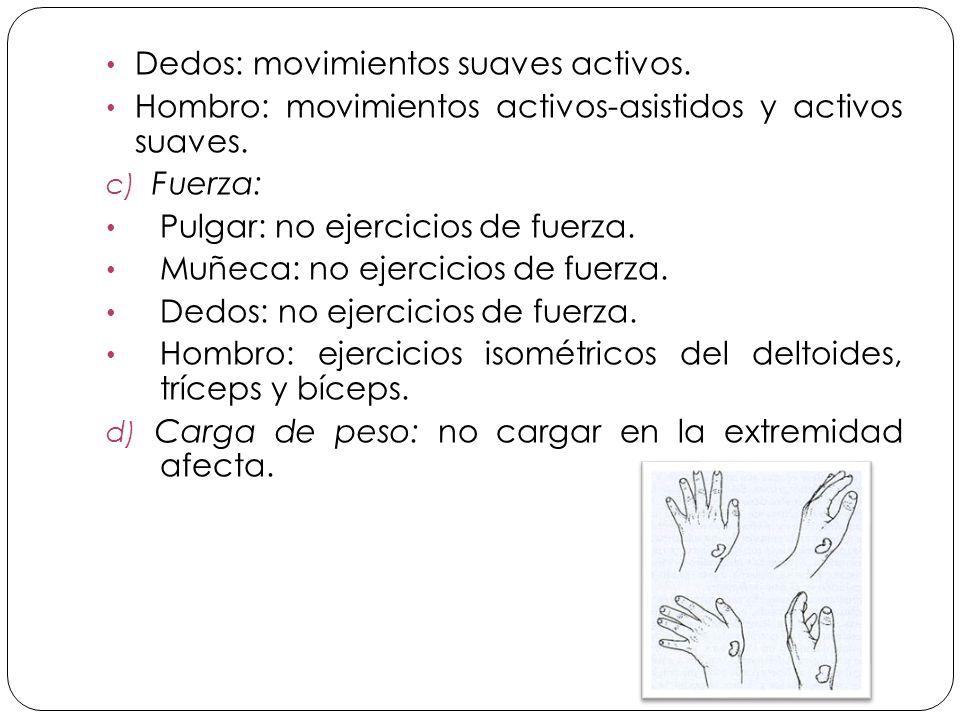 Dedos: movimientos suaves activos.Hombro: movimientos activos-asistidos y activos suaves.