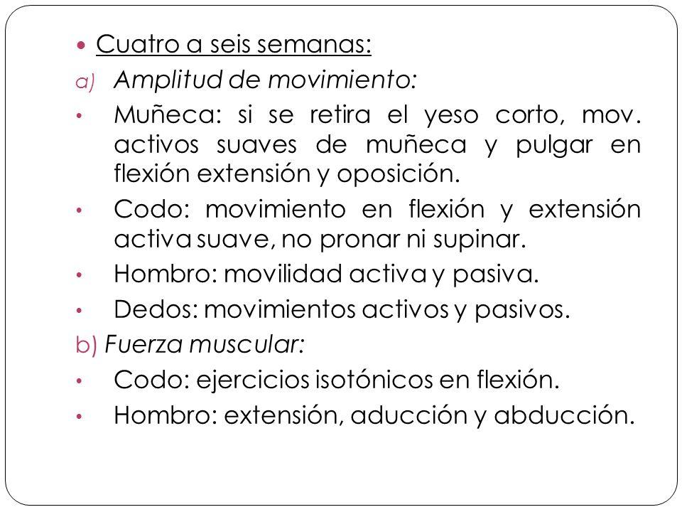 Cuatro a seis semanas: a) Amplitud de movimiento: Muñeca: si se retira el yeso corto, mov.