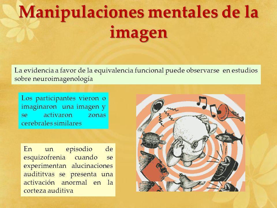 Manipulaciones mentales de la imagen La evidencia a favor de la equivalencia funcional puede observarse en estudios sobre neuroimagenología Los partic