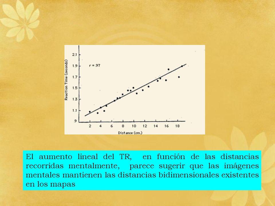El aumento lineal del TR, en función de las distancias recorridas mentalmente, parece sugerir que las imágenes mentales mantienen las distancias bidim
