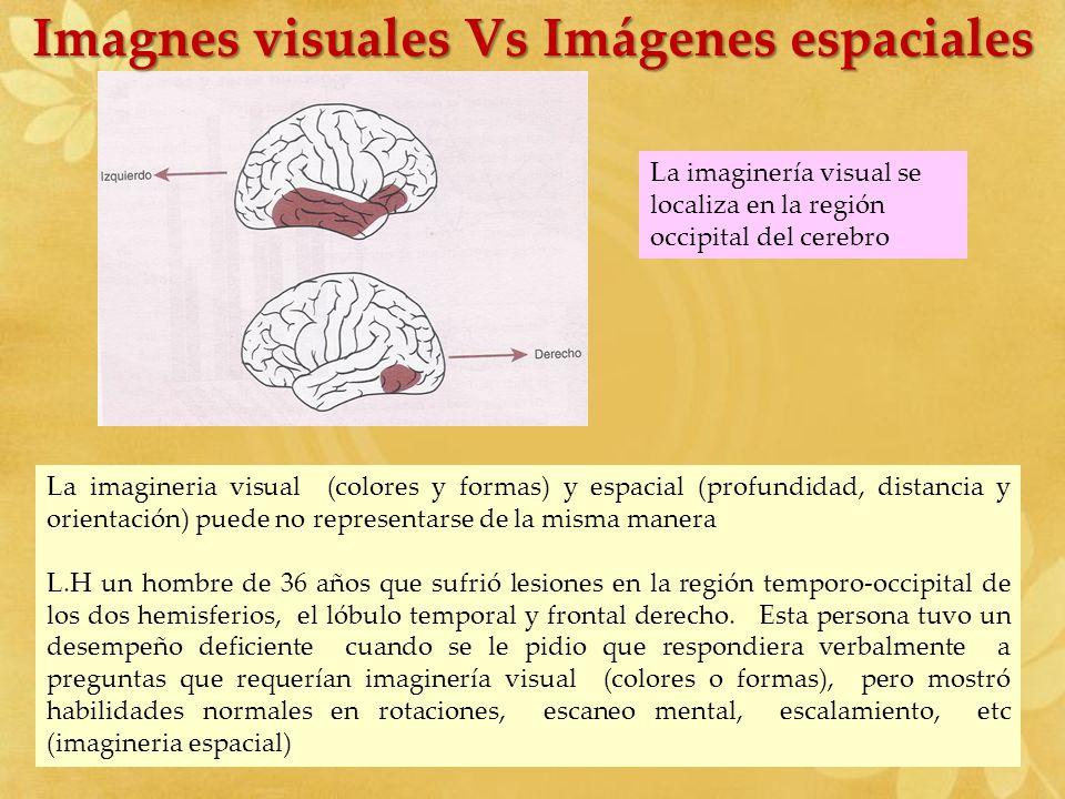 Imagnes visuales Vs Imágenes espaciales La imagineria visual (colores y formas) y espacial (profundidad, distancia y orientación) puede no representar