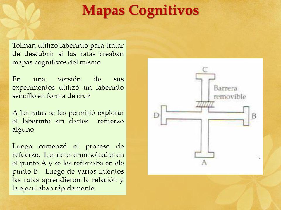 Mapas Cognitivos Tolman utilizó laberinto para tratar de descubrir si las ratas creaban mapas cognitivos del mismo En una versión de sus experimentos