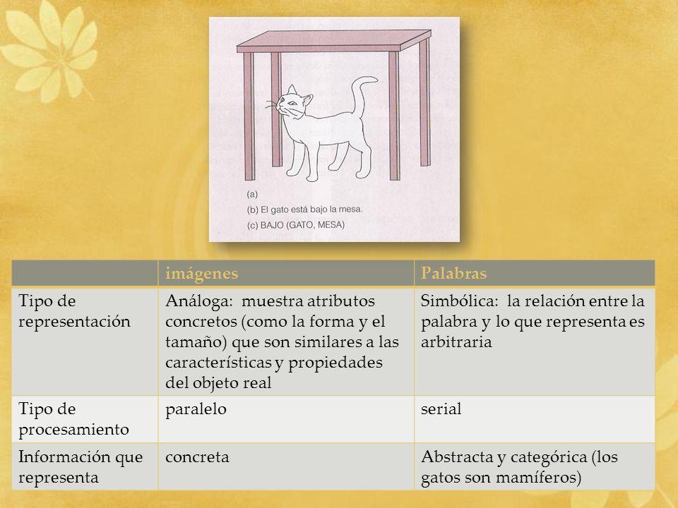 imágenesPalabras Tipo de representación Análoga: muestra atributos concretos (como la forma y el tamaño) que son similares a las características y pro
