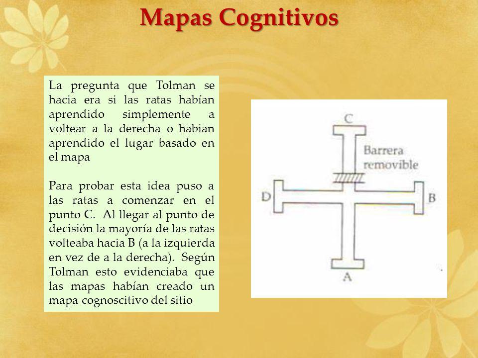 Mapas Cognitivos La pregunta que Tolman se hacia era si las ratas habían aprendido simplemente a voltear a la derecha o habian aprendido el lugar basa