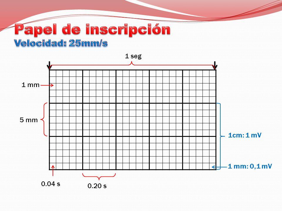 1 mm 5 mm 0.04 s 0.20 s 1 seg 1cm: 1 mV 1 mm: 0,1 mV