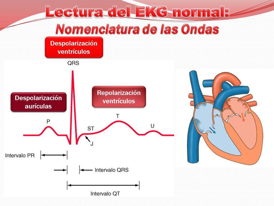 Despolarización ventrículos Despolarización aurículas Repolarización ventrículos