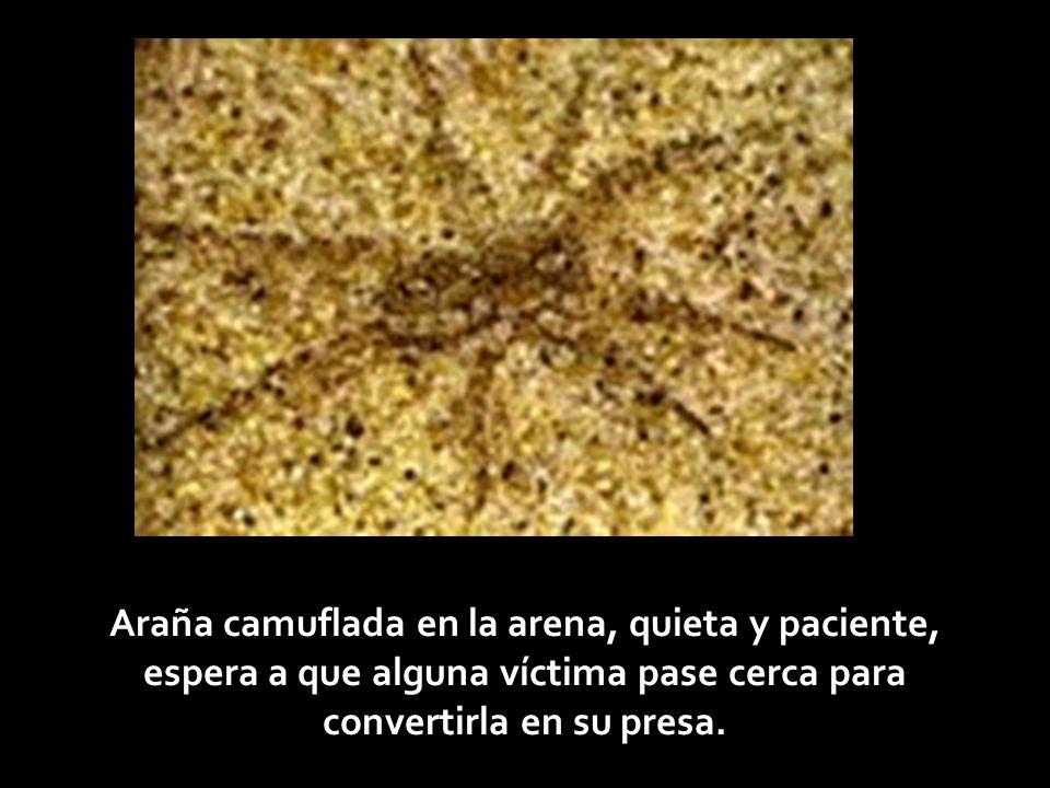 Insecto camuflado simulando una hoja como las que le rodean.