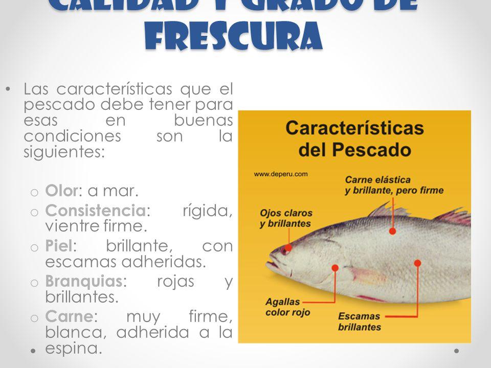 CALIDAD Y GRADO DE FRESCURA Las características que el pescado debe tener para esas en buenas condiciones son la siguientes: o Olor : a mar.