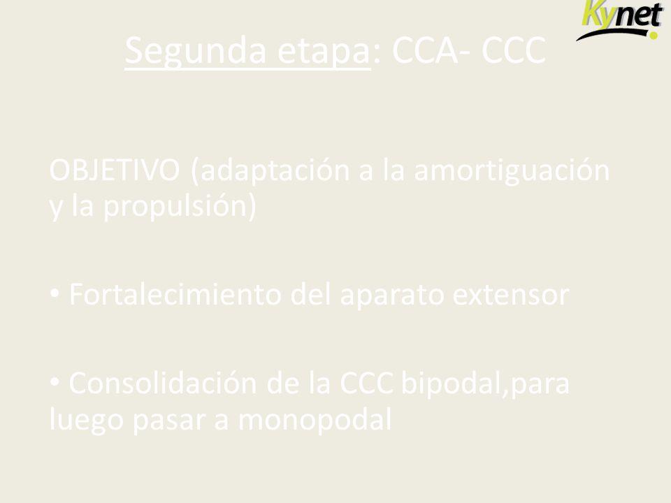 Segunda etapa: CCA- CCC OBJETIVO (adaptación a la amortiguación y la propulsión) Fortalecimiento del aparato extensor Consolidación de la CCC bipodal,