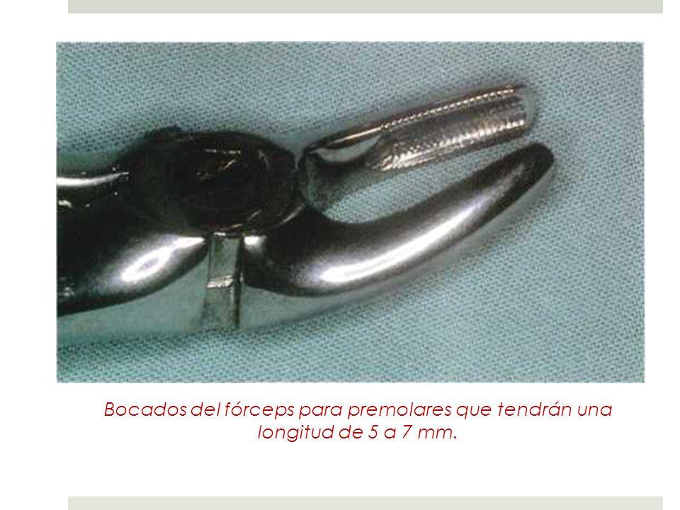 Bocados del fórceps para premolares que tendrán una longitud de 5 a 7 mm.