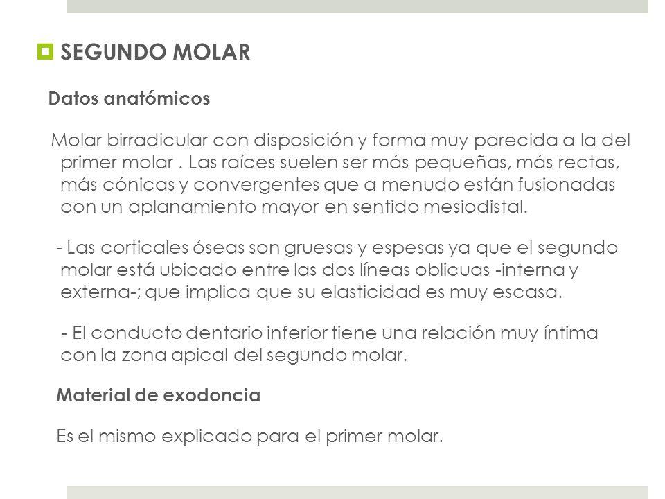 SEGUNDO MOLAR Datos anatómicos Molar birradicular con disposición y forma muy parecida a la del primer molar.