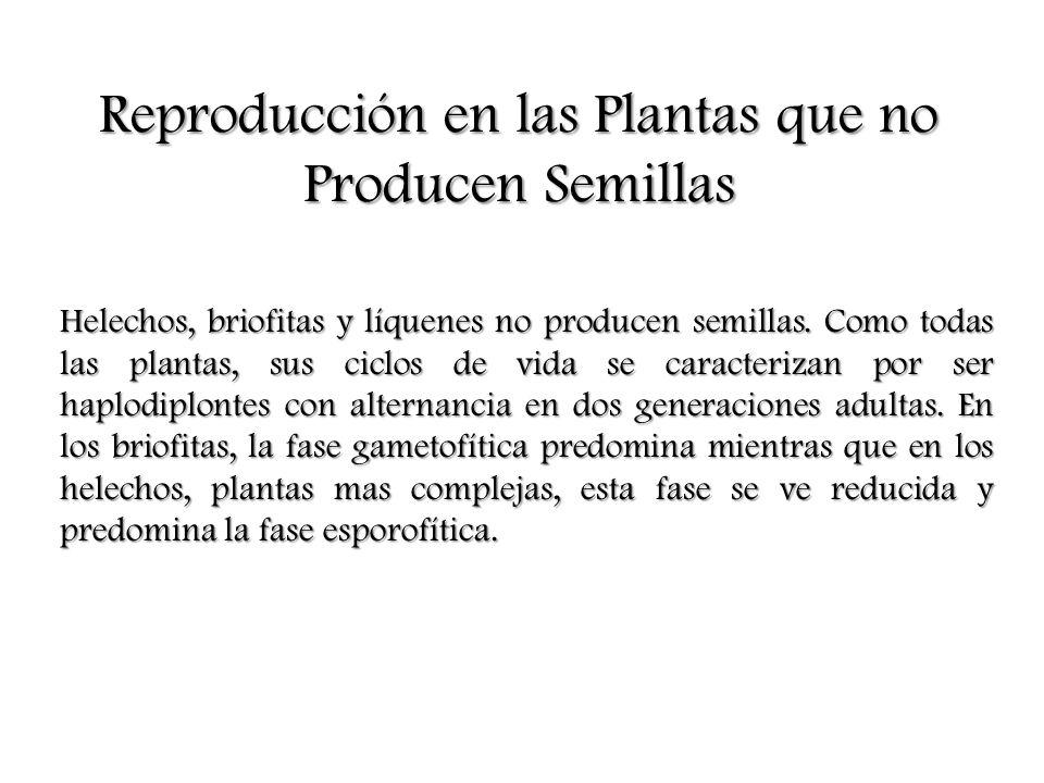 Reproducción en las Plantas que no Producen Semillas Helechos, briofitas y líquenes no producen semillas. Como todas las plantas, sus ciclos de vida s