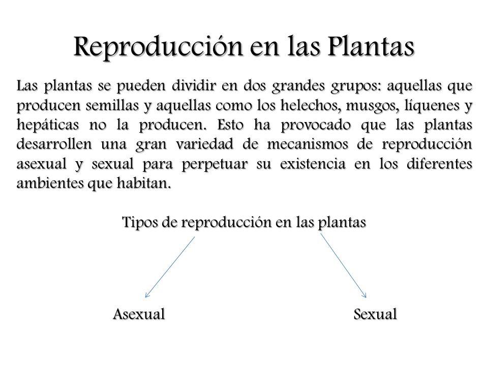 Tipos de Reproducción Asexual en las Plantas Natural Estolones Tubérculos Bulbos Rizomas