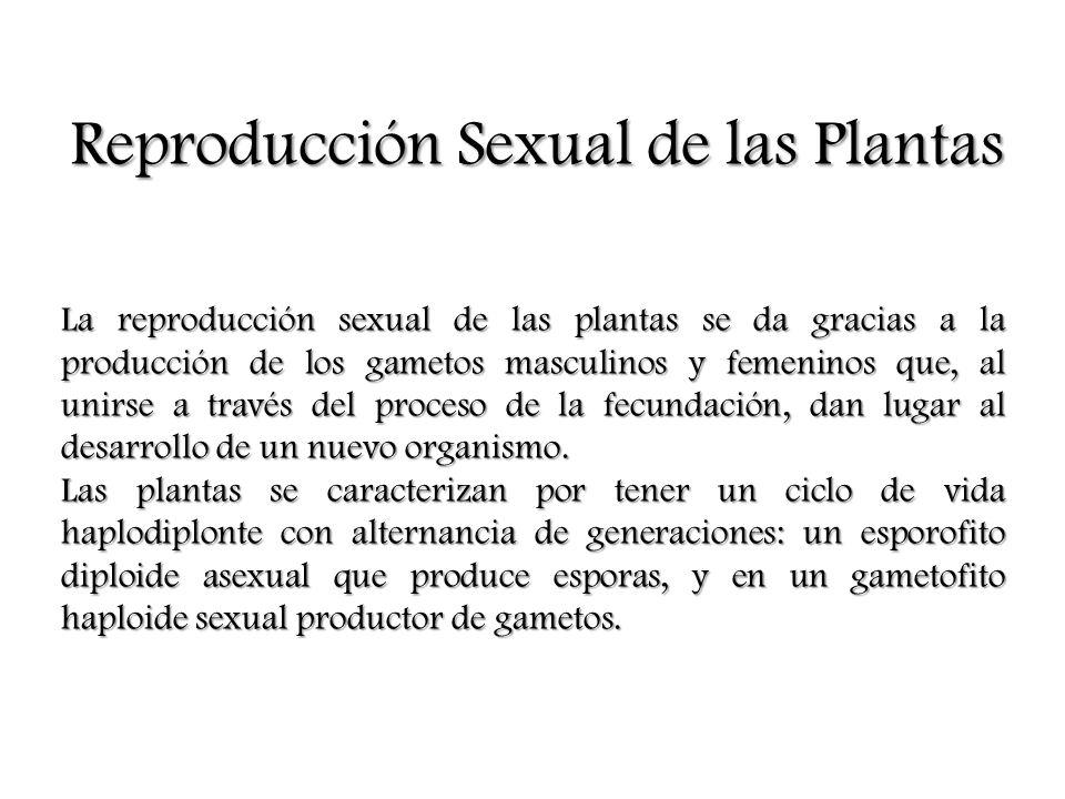 Reproducción en las Plantas que no Producen Semillas Helechos, briofitas y líquenes no producen semillas.