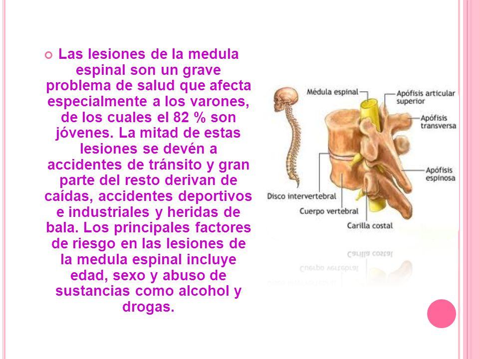 Las lesiones de la medula espinal son un grave problema de salud que afecta especialmente a los varones, de los cuales el 82 % son jóvenes. La mitad d
