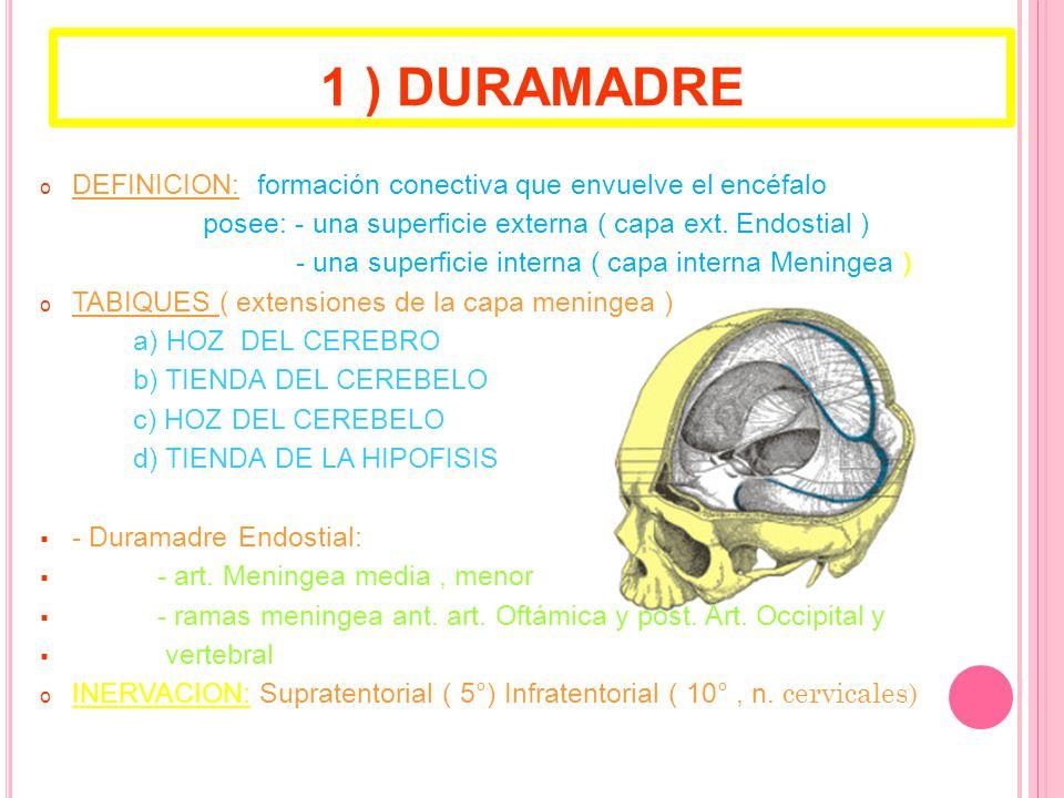 1 ) DURAMADRE o DEFINICION: formación conectiva que envuelve el encéfalo posee: - una superficie externa ( capa ext.