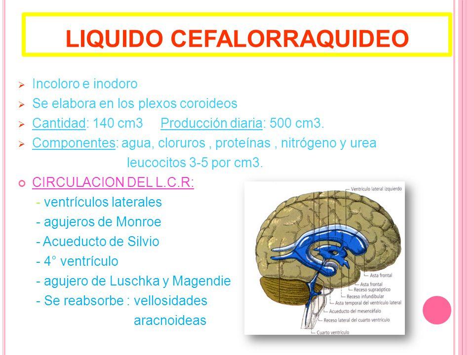 LIQUIDO CEFALORRAQUIDEO Incoloro e inodoro Se elabora en los plexos coroideos Cantidad: 140 cm3 Producción diaria: 500 cm3.