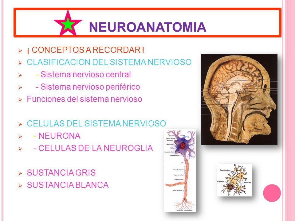 NEUROANATOMIA ¡ CONCEPTOS A RECORDAR .