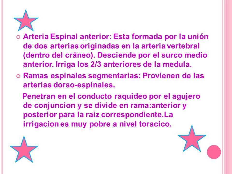 Arteria Espinal anterior: Esta formada por la unión de dos arterias originadas en la arteria vertebral (dentro del cráneo).
