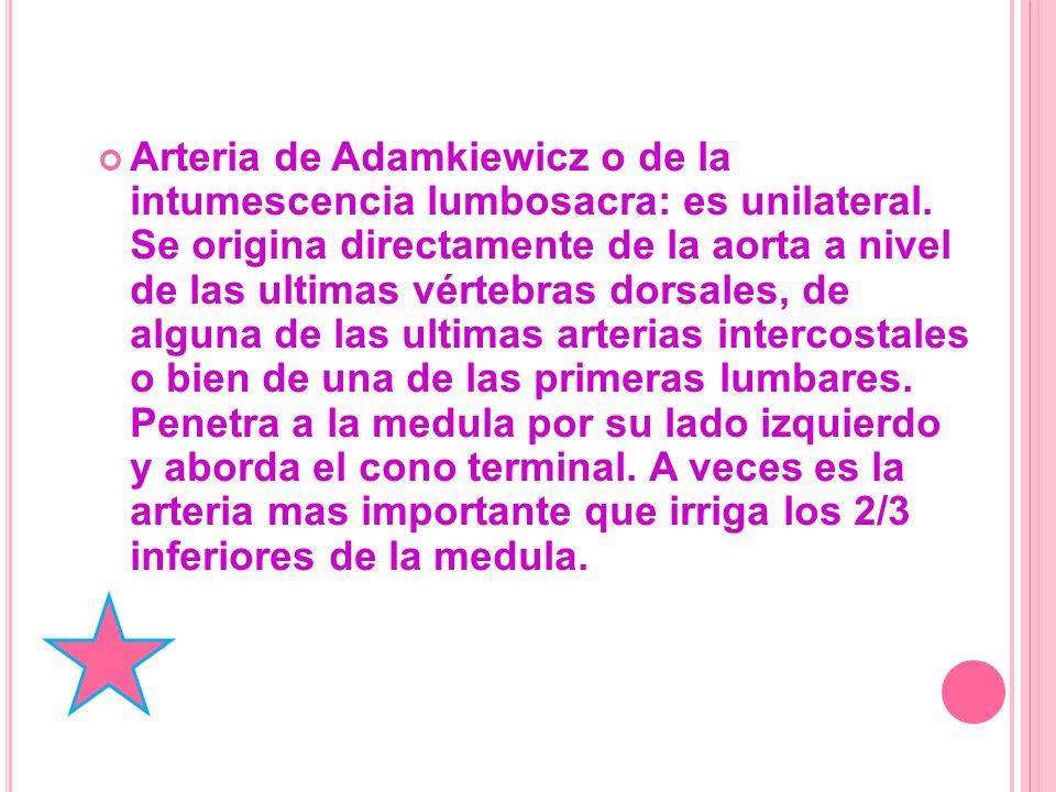 Arteria de Adamkiewicz o de la intumescencia lumbosacra: es unilateral.
