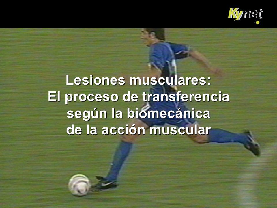 Lesiones musculares: El proceso de transferencia según la biomecánica de la acción muscular
