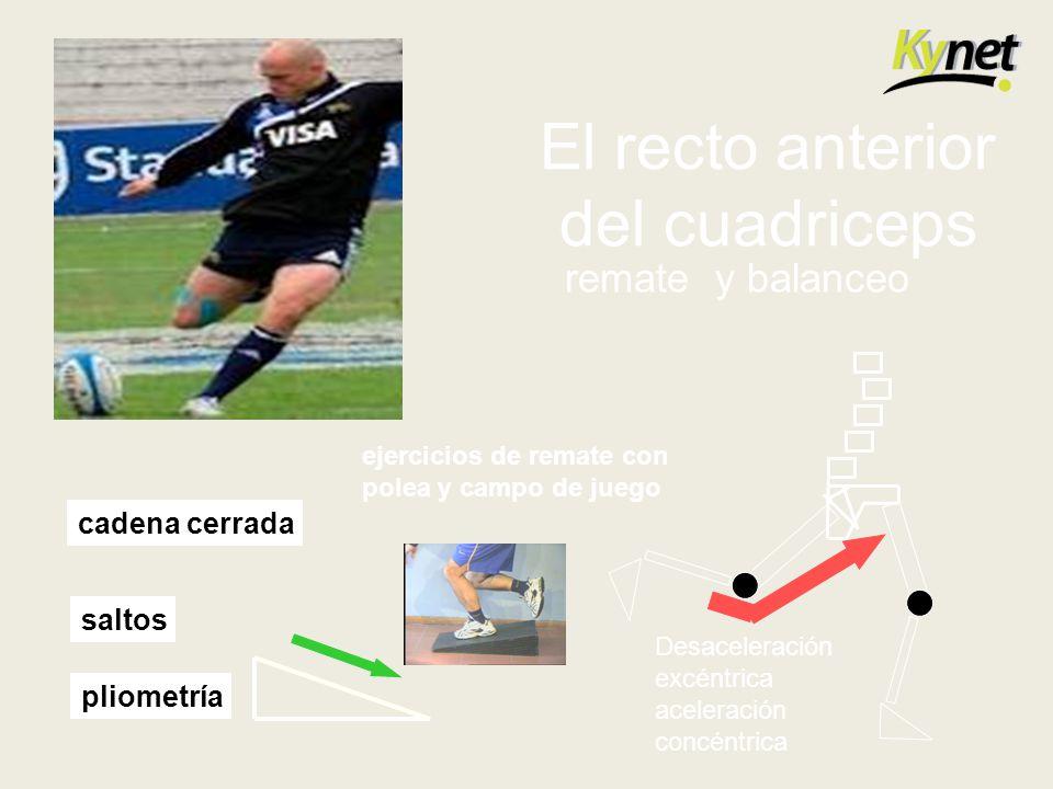 El recto anterior del cuadriceps Desaceleración excéntrica aceleración concéntrica remate y balanceo ejercicios de remate con polea y campo de juego c