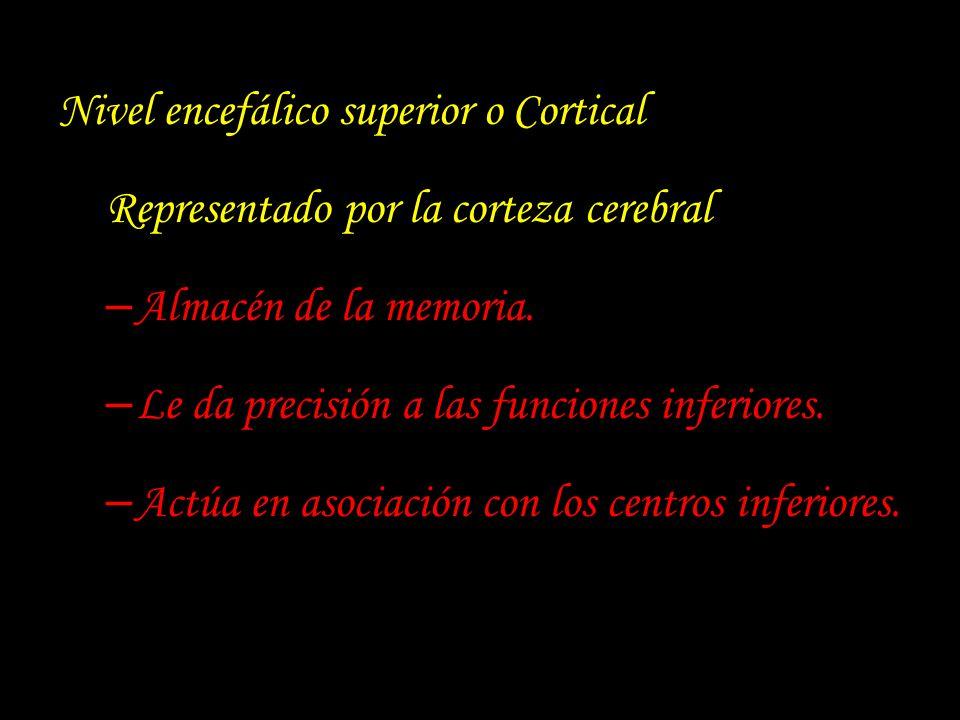 Nivel encefálico superior o Cortical Representado por la corteza cerebral – Almacén de la memoria. – Le da precisión a las funciones inferiores. – Act