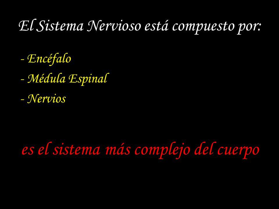 El Sistema Nervioso está compuesto por: - Encéfalo - Médula Espinal - Nervios es el sistema más complejo del cuerpo