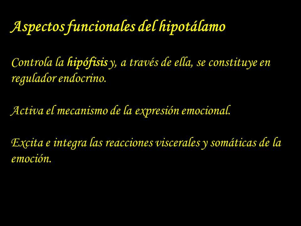 Aspectos funcionales del hipotálamo Controla la hipófisis y, a través de ella, se constituye en regulador endocrino. Activa el mecanismo de la expresi
