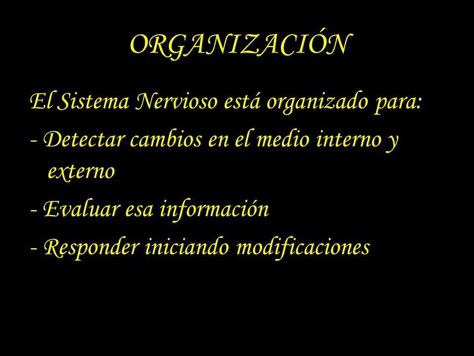 ORGANIZACIÓN El Sistema Nervioso está organizado para: - Detectar cambios en el medio interno y externo - Evaluar esa información - Responder iniciand