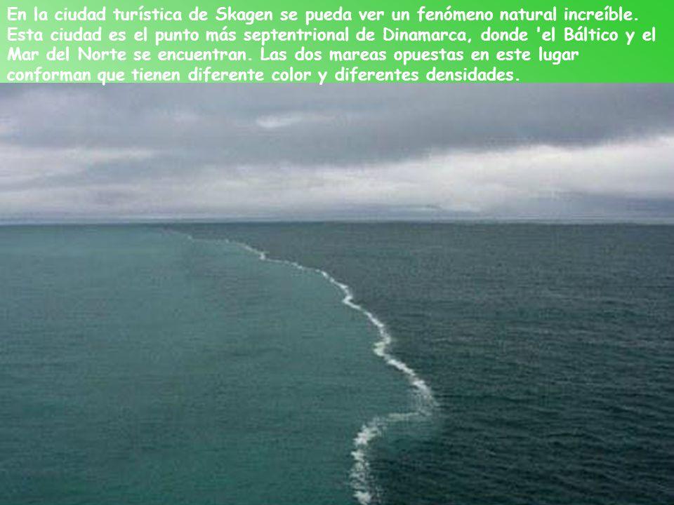 Dos veces al año en el Golfo de México migran rayas. Alrededor de 10 mil rayas nadan desde la Florida hasta la Península de Yucatán en la primavera y
