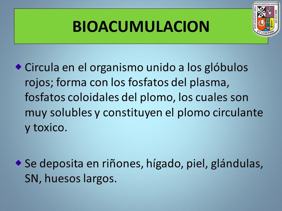 BIOACUMULACION Circula en el organismo unido a los glóbulos rojos; forma con los fosfatos del plasma, fosfatos coloidales del plomo, los cuales son mu