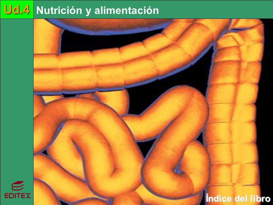 Nutrición y alimentaciónUd.4 Índice del libro Índice del libroUd.4