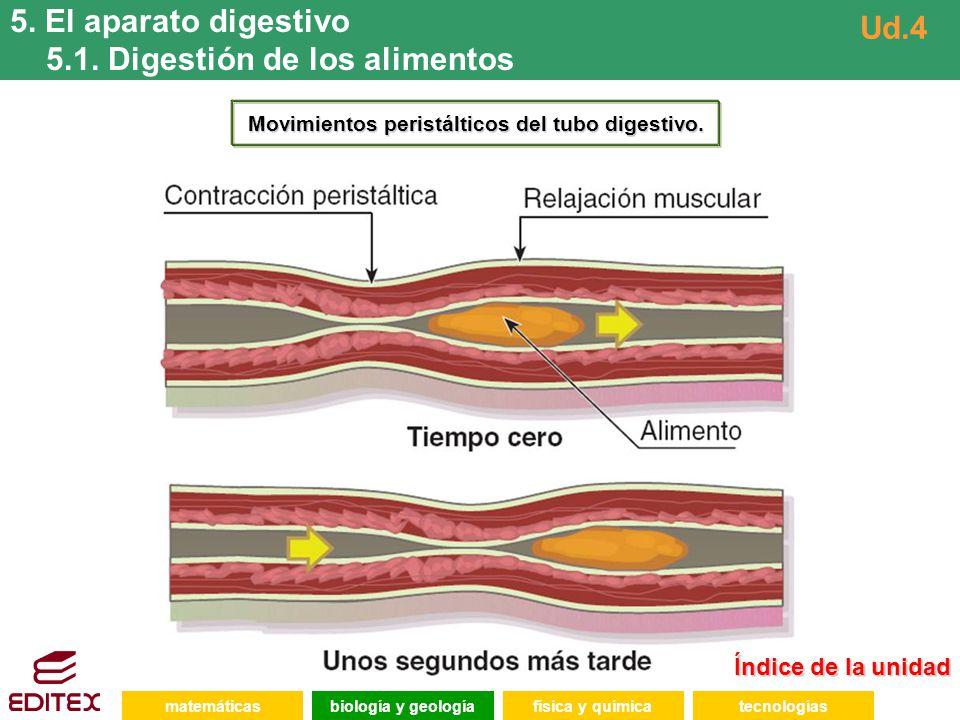 matemáticasfísica y químicatecnologíasbiología y geología 5. El aparato digestivo 5.1. Digestión de los alimentos Ud.4 Índice de la unidad Índice de l