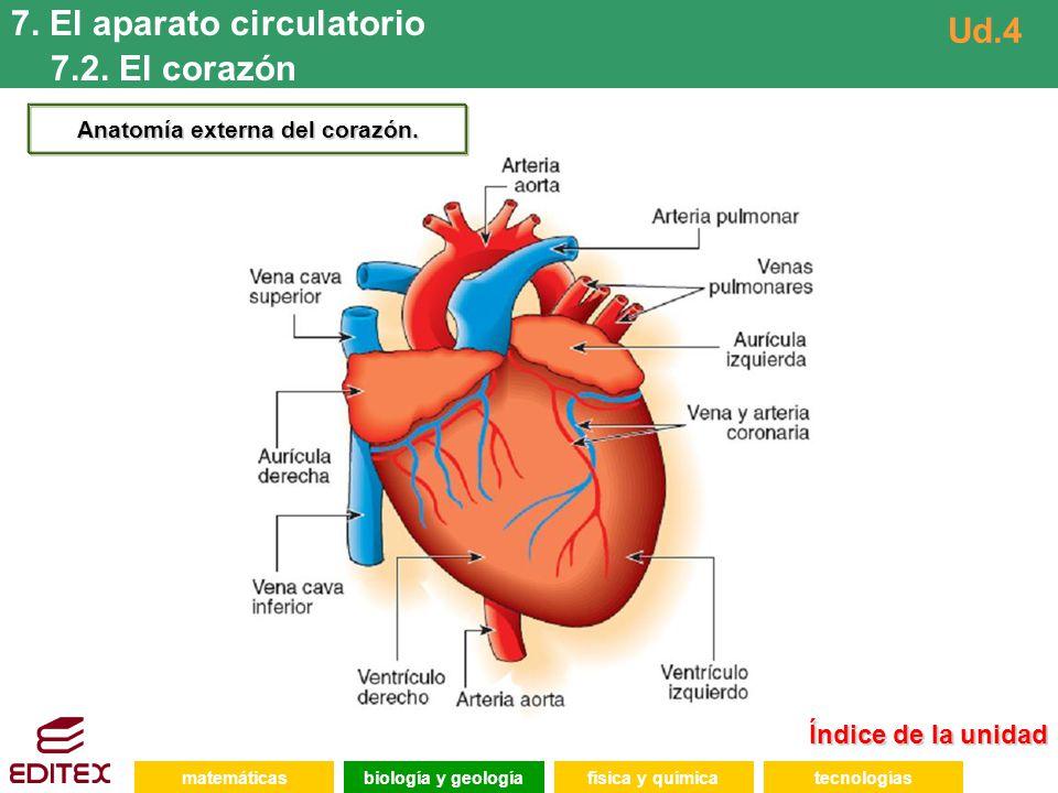 Índice de la unidad Índice de la unidad matemáticasfísica y químicatecnologíasbiología y geología 7. El aparato circulatorio 7.2. El corazón Ud.4 Anat