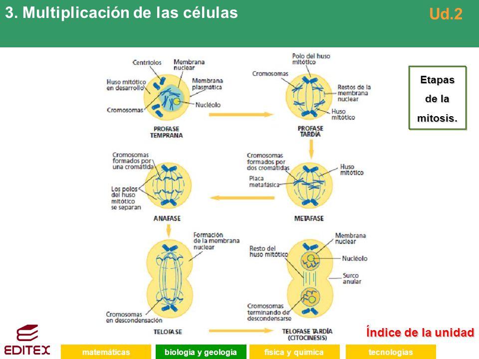 Índice de la unidad Índice de la unidad matemáticasfísica y químicatecnologíasbiología y geología 3.