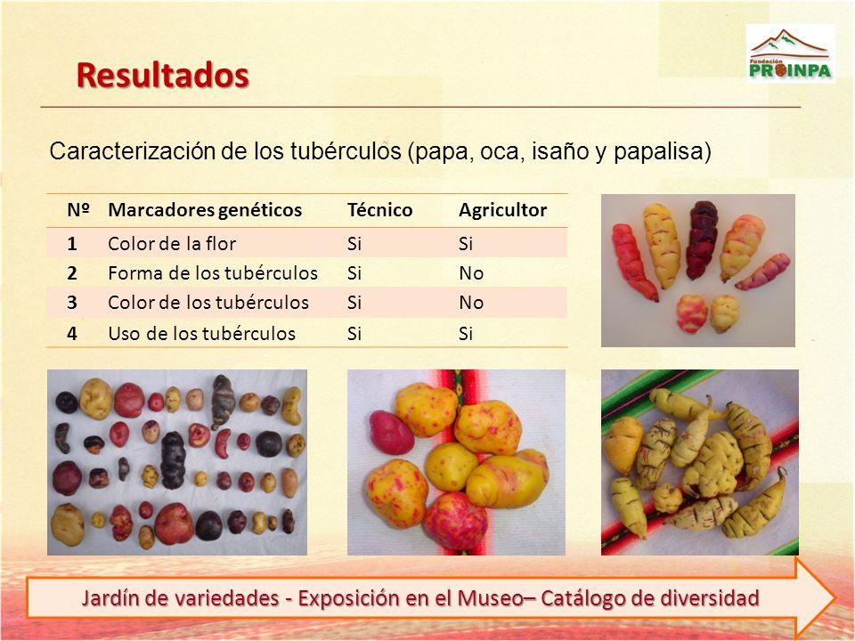 Resultados NºMarcadores genéticosTécnicoAgricultor 1Color de la florSi 2Forma de los tubérculosSiNo 3Color de los tubérculosSiNo 4Uso de los tubérculo