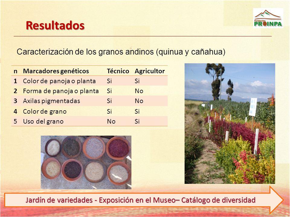 Resultados nMarcadores genéticosTécnicoAgricultor 1Color de panoja o plantaSi 2Forma de panoja o plantaSiNo 3Axilas pigmentadasSiNo 4Color de granoSi