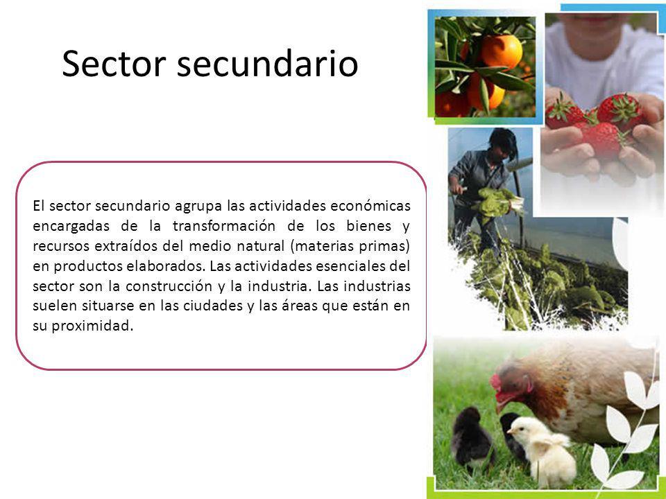 El sector secundario agrupa las actividades económicas encargadas de la transformación de los bienes y recursos extraídos del medio natural (materias