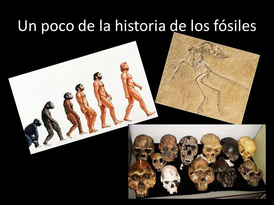 Un poco de la historia de los fósiles