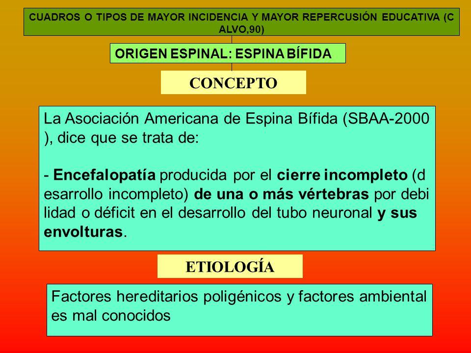 CUADROS O TIPOS DE MAYOR INCIDENCIA Y MAYOR REPERCUSIÓN EDUCATIVA (C ALVO,90) ORIGEN ESPINAL: ESPINA BÍFIDA CONCEPTO La Asociación Americana de Espina Bífida (SBAA-2000 ), dice que se trata de: - Encefalopatía producida por el cierre incompleto (d esarrollo incompleto) de una o más vértebras por debi lidad o déficit en el desarrollo del tubo neuronal y sus envolturas.