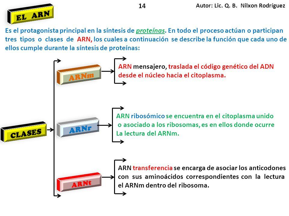 Autor: Lic. Q. B. Nilxon Rodríguez 14 Es el protagonista principal en la síntesis de proteínas. En todo el proceso actúan o participan tres tipos o cl