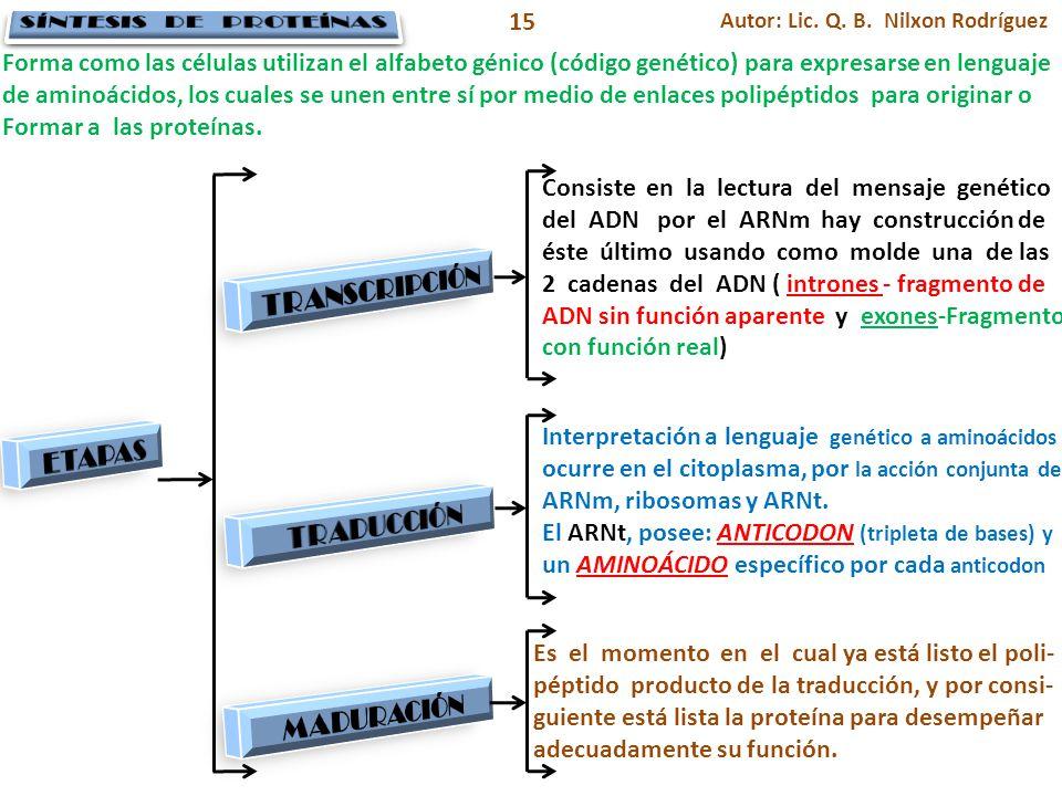 Autor: Lic. Q. B. Nilxon Rodríguez 15 Consiste en la lectura del mensaje genético del ADN por el ARNm hay construcción de éste último usando como mold