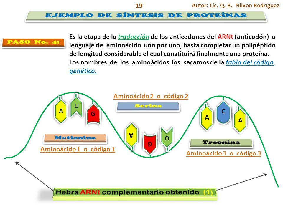 A A G G A A A A U U A A G G U U C C Autor: Lic. Q. B. Nilxon Rodríguez 19 Es la etapa de la traducción de los anticodones del ARNt (anticodón) a lengu