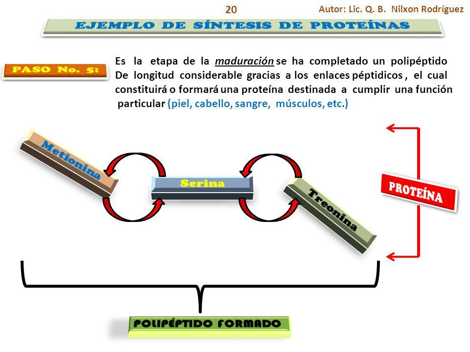 Autor: Lic. Q. B. Nilxon Rodríguez 20 Es la etapa de la maduración se ha completado un polipéptido De longitud considerable gracias a los enlaces pépt
