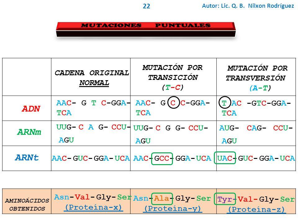Autor: Lic. Q. B. Nilxon Rodríguez 22 AAC- G T C-GGA- TCA ADN CADENA ORIGINAL NORMAL UUG- C A G-CCU- AGUAGU ARNm ARNt AAC-GUC-GUC-GGA-UCAUCA AAC- G C